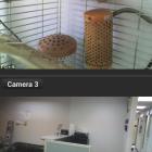 cam-viewer-for-linksys-cameras_1254