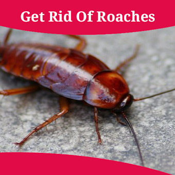How To Get Rid Of Roaches